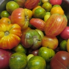 Heirlooms, GMOs, Open-Pollinated, Hybrids . . . which do I choose?