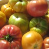 FREE heirloom tomato seeds collection giveaway!