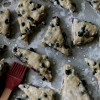Aronia Berry Infatuation & Aronia Berry Scones *recipe*