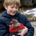 Question: Does your chicken need a sweater?