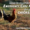 How to assemble an Emergency Care Kit for your chickens: be prepared!
