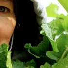 A Fine Kettle of Turnip Greens: How to Freeze 'em, Already!