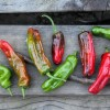 7 New Pepper Varieties from this year's garden that I love to the moon
