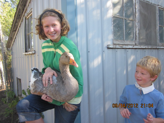 Here Amalia holds our lone goose, Lucy, and little Mack assesses how close he can safely get to her.