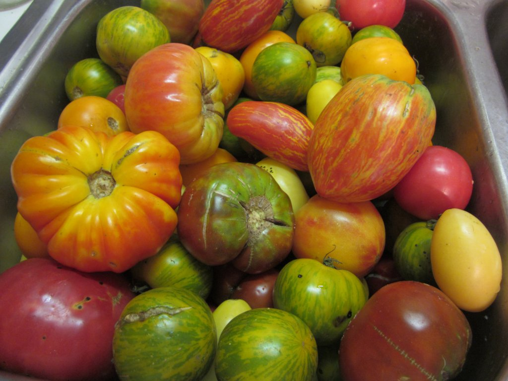 I only grow heirloom tomatoes