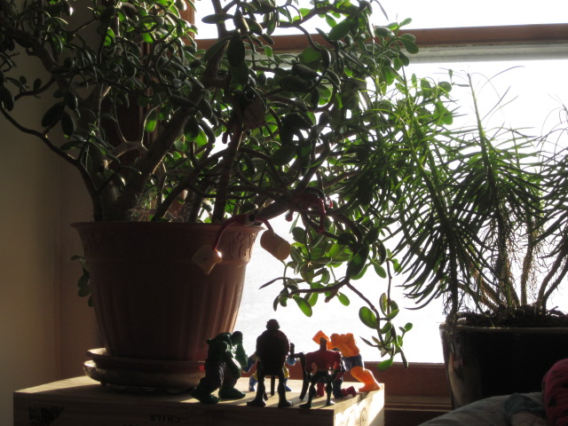 My rubber plant and my stick plant share the sunshine with little Mack's action figures.