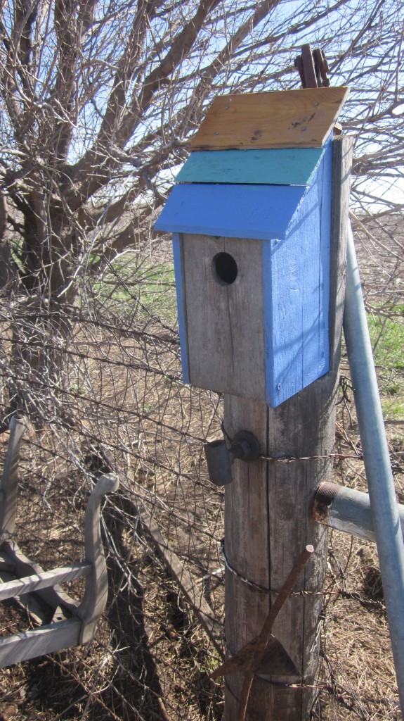 My son Timothy hung our bluebird houses outside right away.  This one is on a fencepost close to the chicken coop.