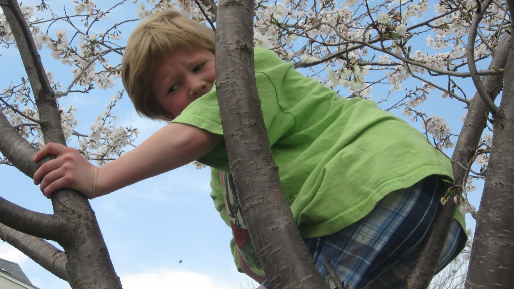 """This tree is full of bees! MOM! Get me down!"""