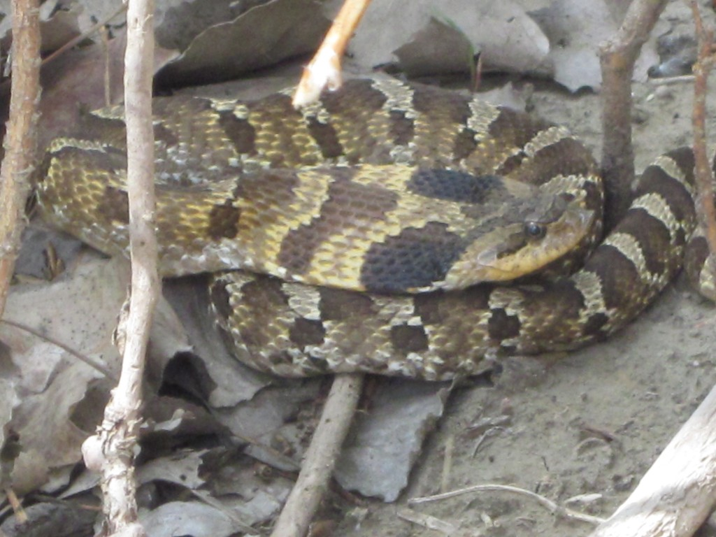 Here's a picture of a snake that we found that day while I wait for you . . .