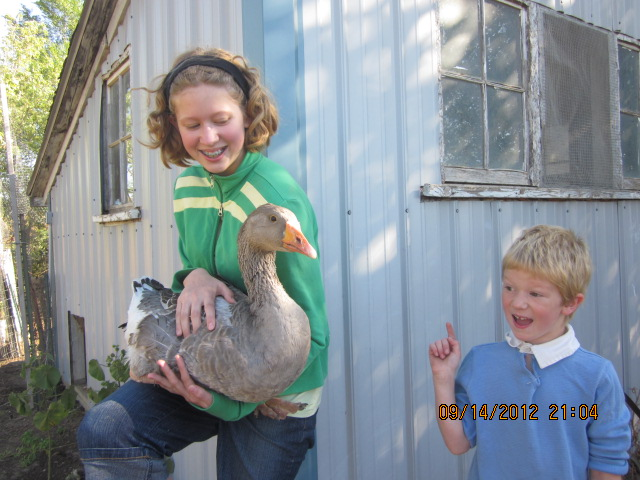 Here are Amalia, Lucy (our goose) and little Mack, in front of my little chicken coop.