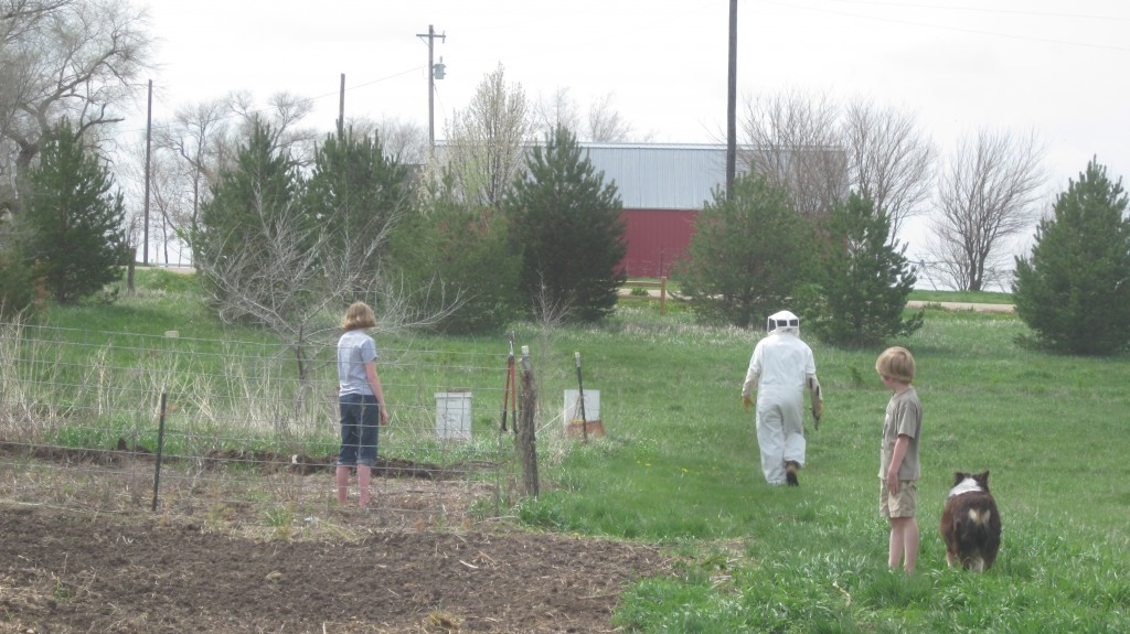 Here all action on the farm stops as Bryan hurries out in his bee-keeping suit.