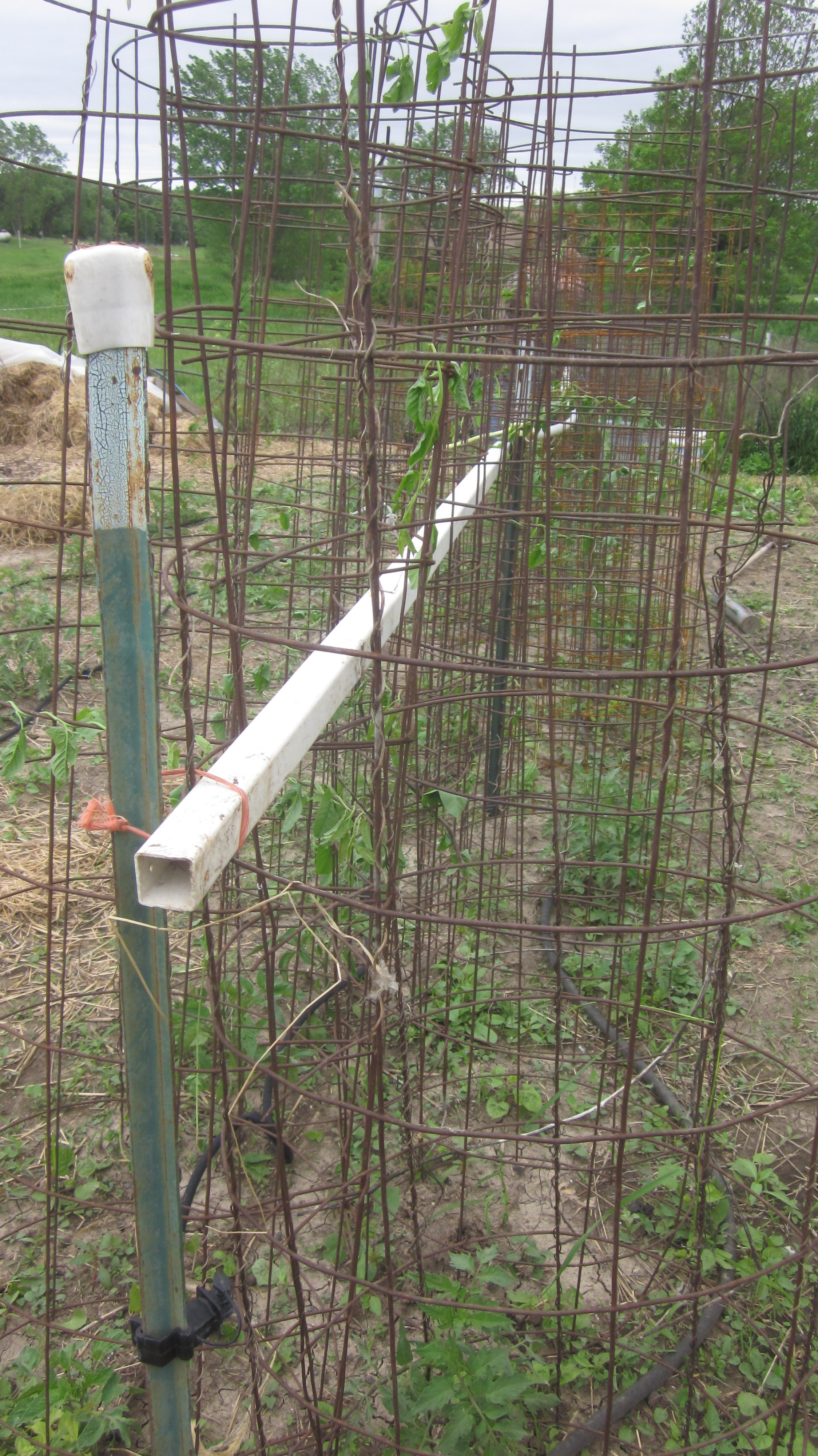 Make the Only Tomato Cages Youll Ever Need in Minutes
