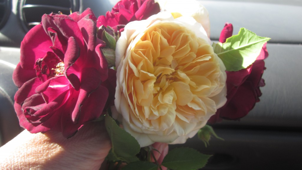 My own baby, little Mack, picked this lovely bouquet for me as we left the house last evening.