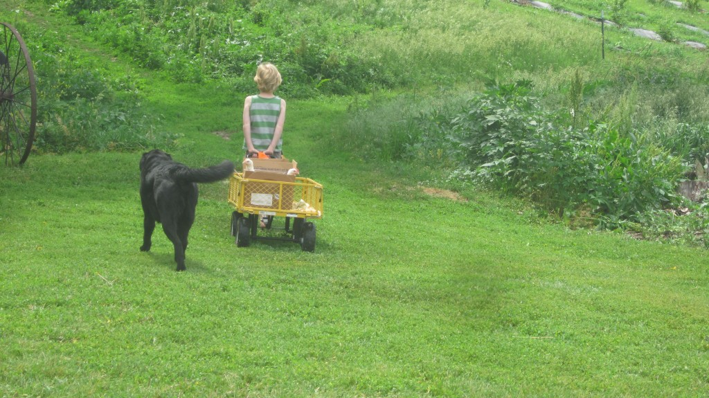 Where the little man and the chickens go, the dogs follow.