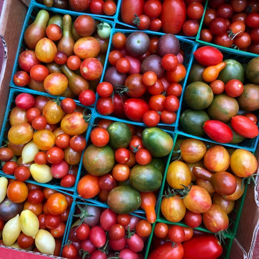flat of small colorful cherry tomatoes