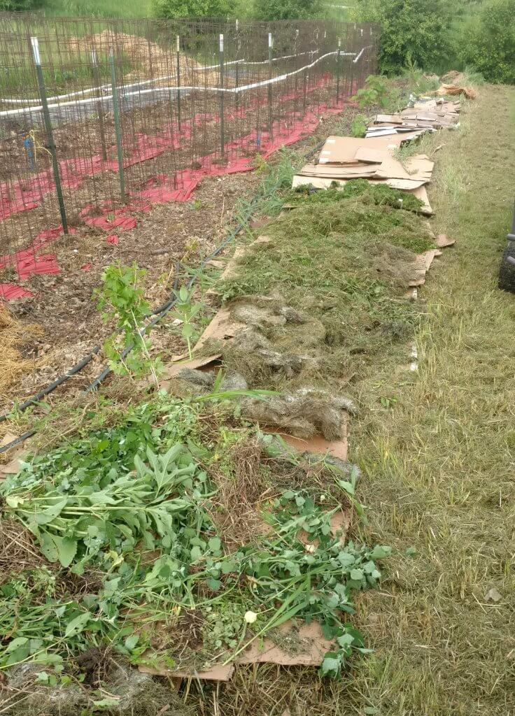 cardboard and grass spread out over garden bed