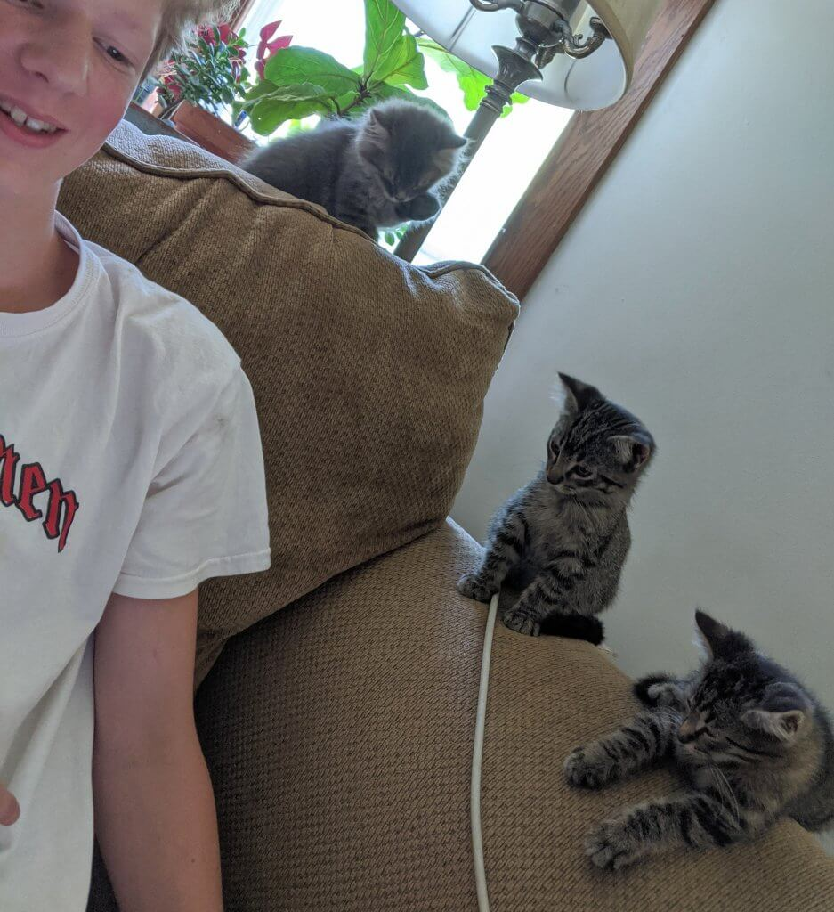 boy with 3 kittens