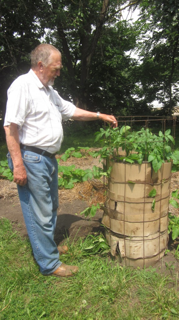 Here's Dad with his potato tower. The potato plants, at this point, had not quite reached the top of the tower.