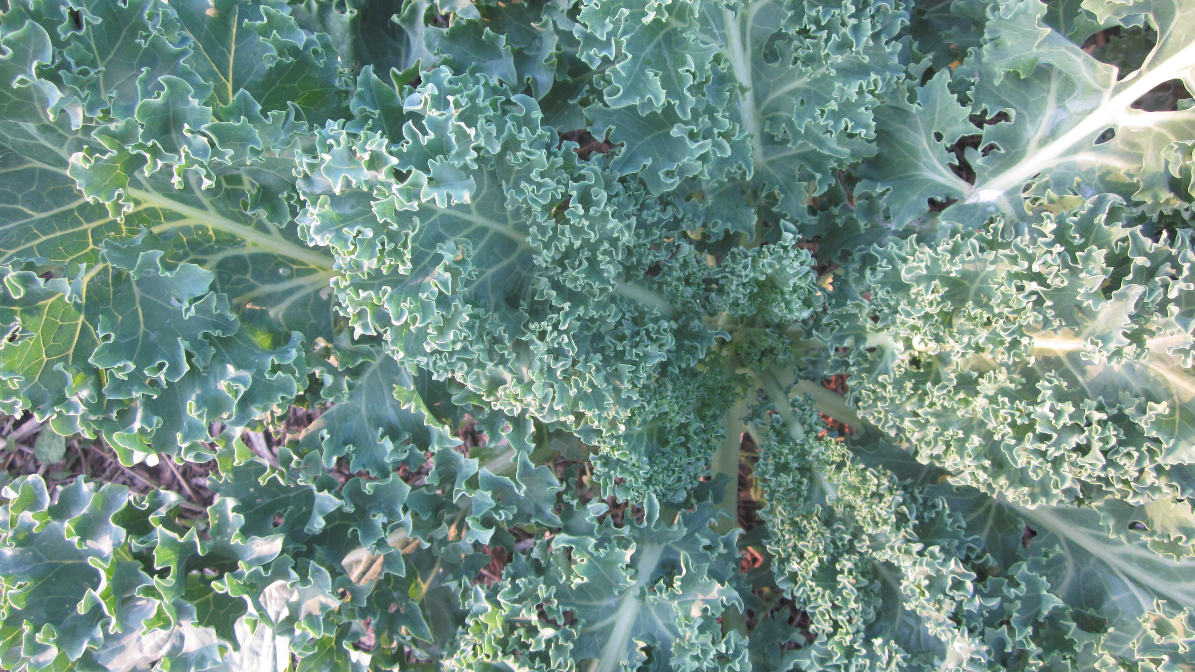 KALE–what's the big deal, anyway?