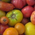 Heirloom tomatoes that I'll grow again next year