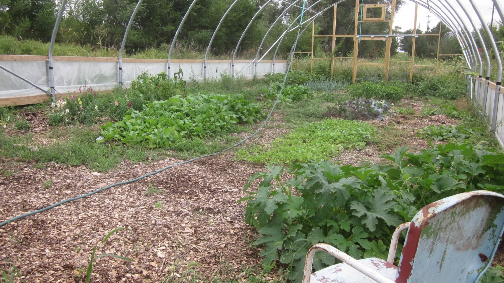 I've got lots of wood chips in my hoop house, but I'll need a fresh layer in the spring!