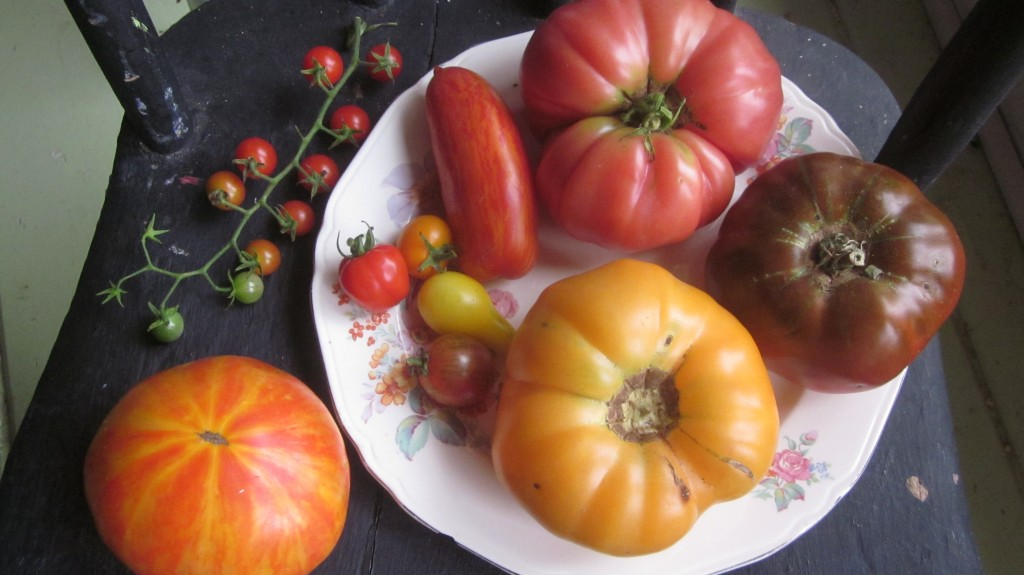 These are the winners in this year's tomato contenders!
