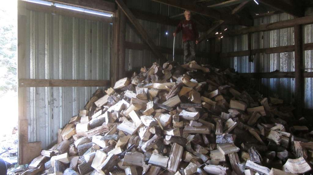 Little Mack shows off his climbing skills, on our pile of firewood.