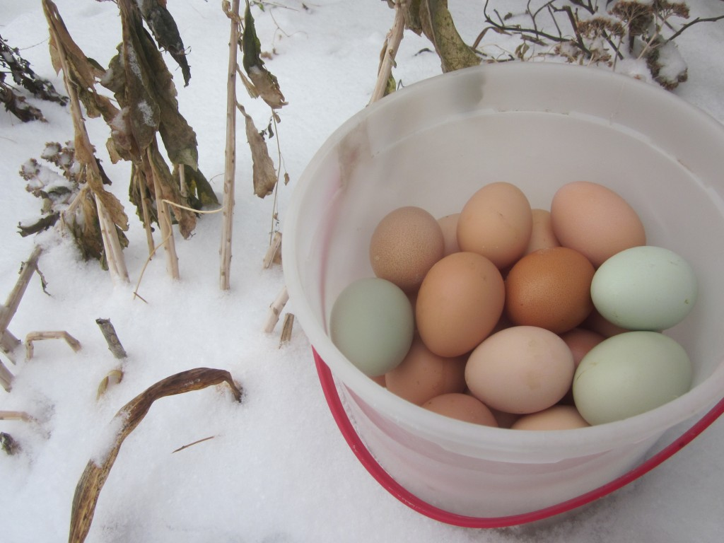 How to keep your hens laying