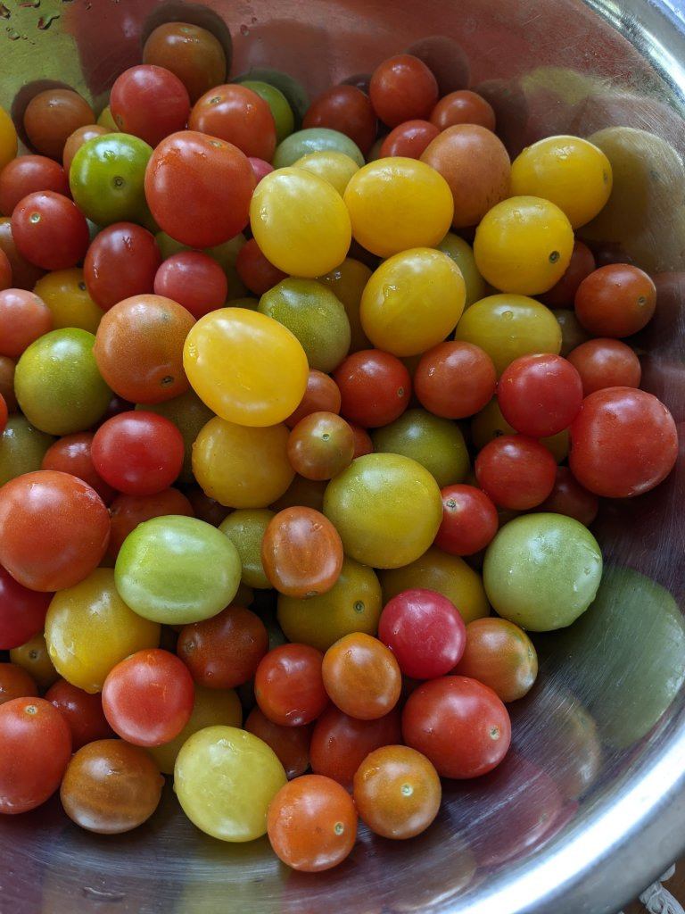 cherry tomatoes, close-up