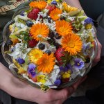 Bunches of reasons to grow Calendula, not least of which: delight!