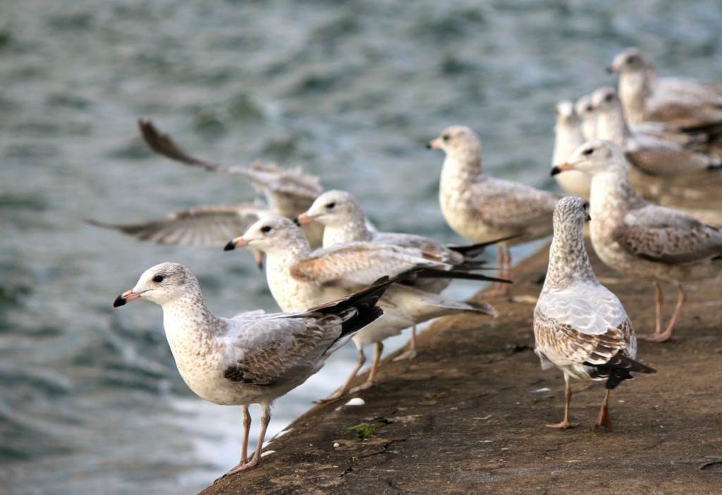 These seagulls were nonplussed by our presence. :)
