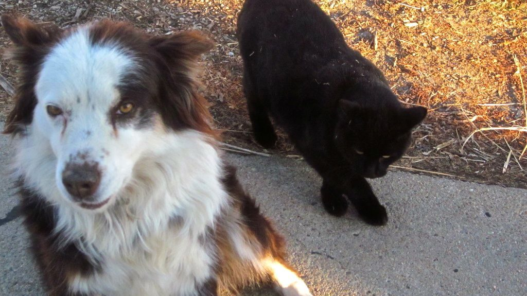 """Bea: """"Get away from me, cat. I'm being photographed."""""""