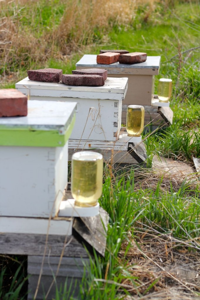 Sugar water is a quick energy source for new bees.