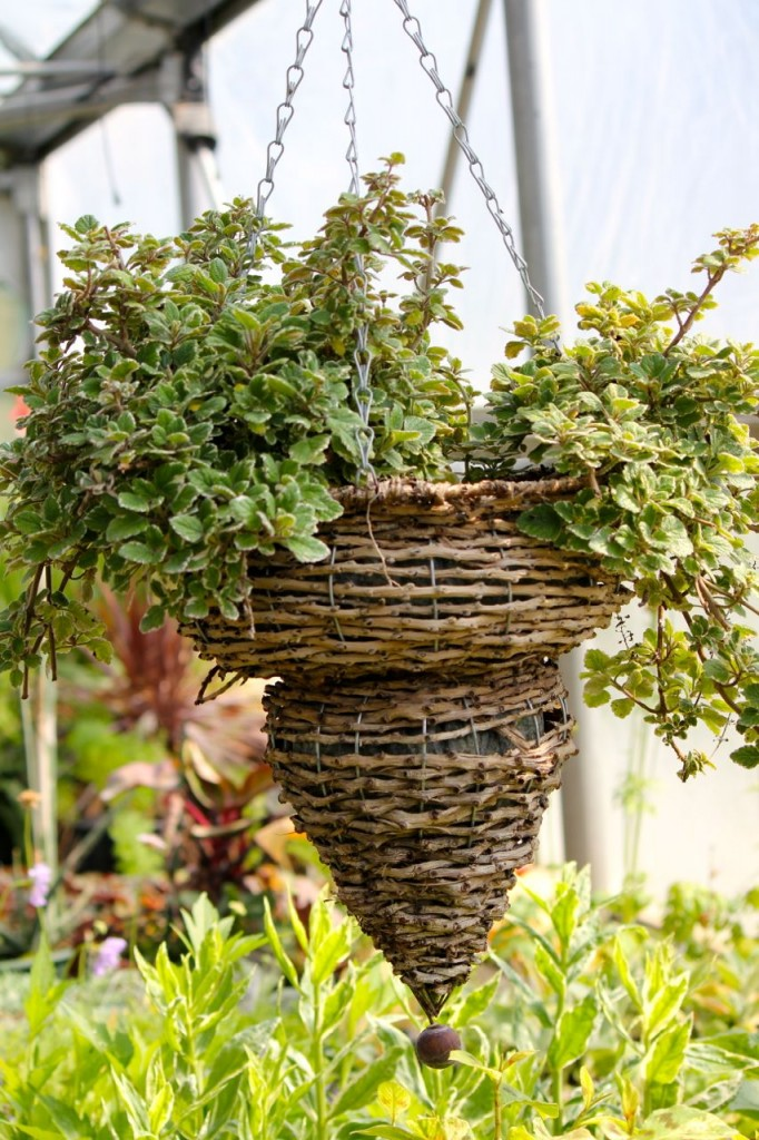I love this hanging basket.