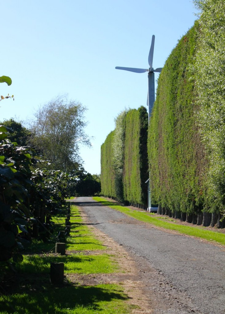 The huge fan you see on the right is used to keep frost away from the vines, on the few occasions when the temperatures hover around freezing.