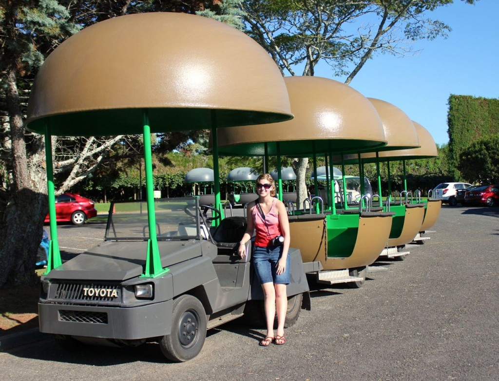 This is the little train that took us around on our tour. Little kiwifruit train: cute, eh?