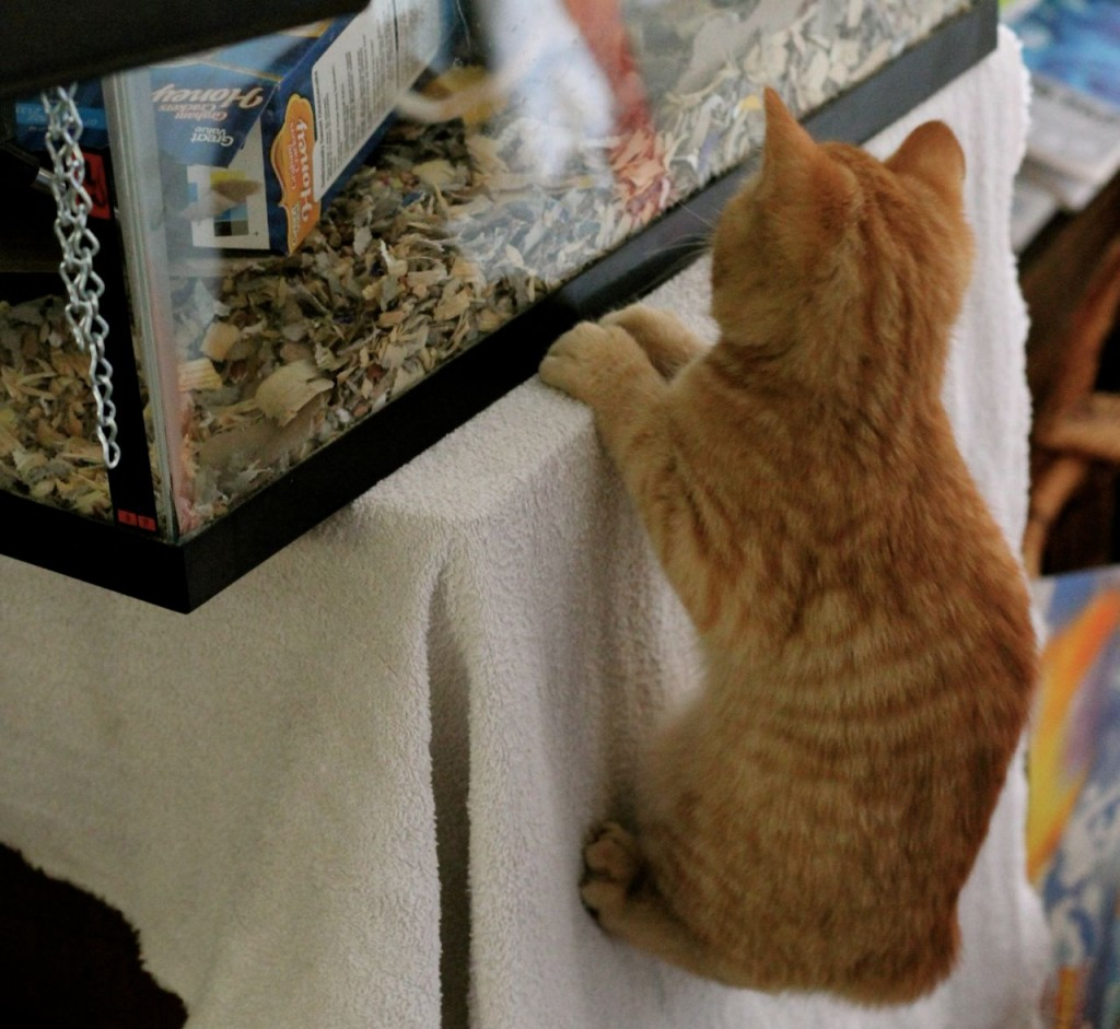 Indoor cats + gerbils is a potentially volatile combination.