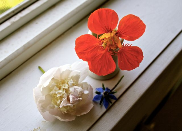 Like this one. Peony bud, nasturtium, and borage blossom. *curtsy*