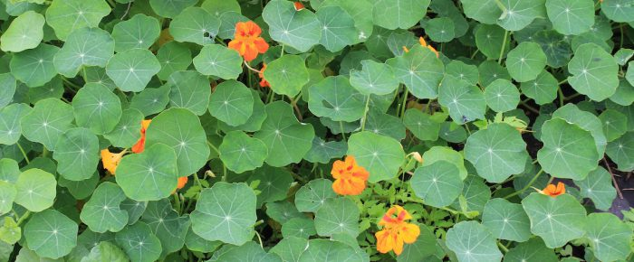 Fall gardening: an unexpected pleasure *sigh* snatched from winter, as it were