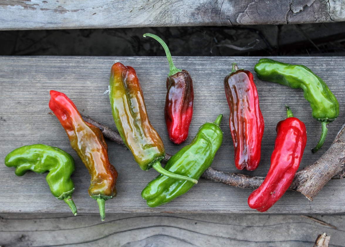 7 New Pepper Varieties from this year's garden that I love