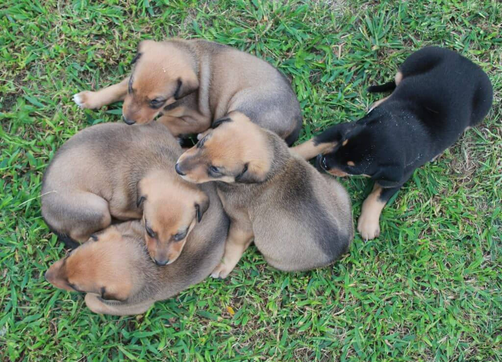 puppies piled all together on grass