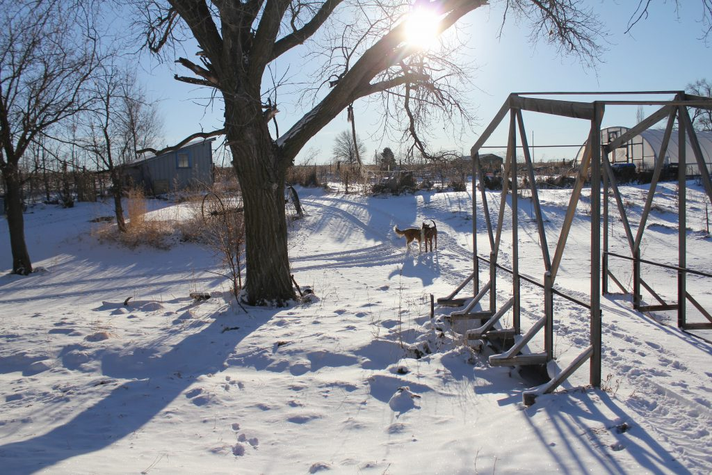 farm scene with dogs, hoophouse and a blanket of snow