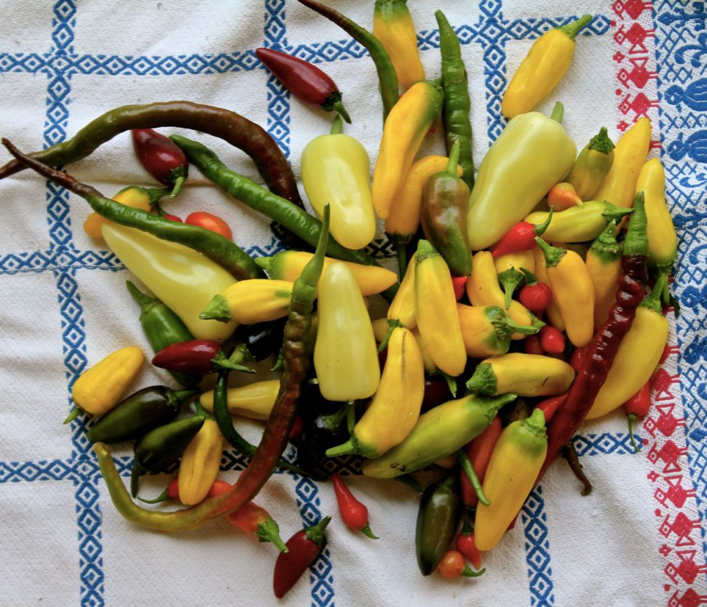 Here's a mixture of spicy peppers that went to a couple of upscale restaurants just today!