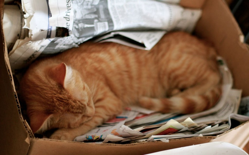 Our kitty Lolo asleep in the newspaper box. Sweet!