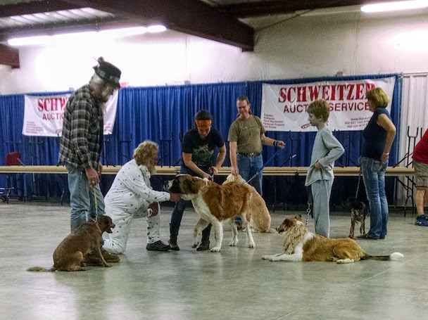 Mack is standing at the right, and Scout lies down, waiting for ,,, the St. Bernard, to settle down enough to do a meet-and-greet.