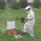 Planting Asparagus need not be dull: when the bees swarm