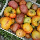 Tomato varieties that I'll grow again, cross my 2018 'mater-pickin' heart