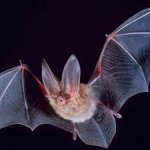A Bat Story
