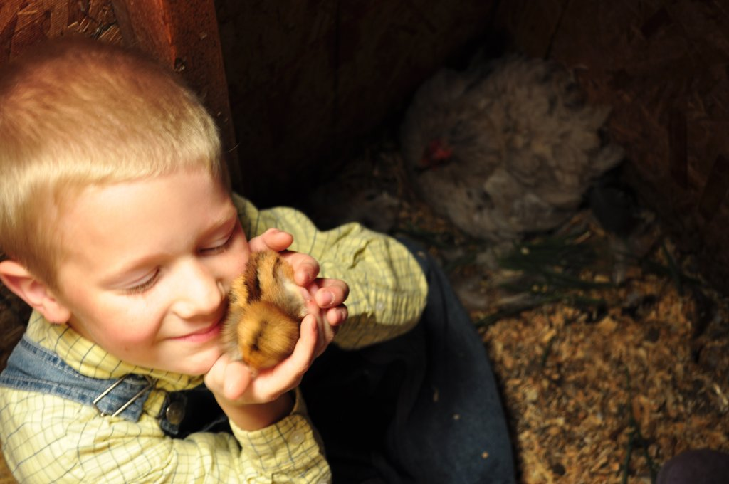 Here's my little Mack cuddling a newly-hatched chick.