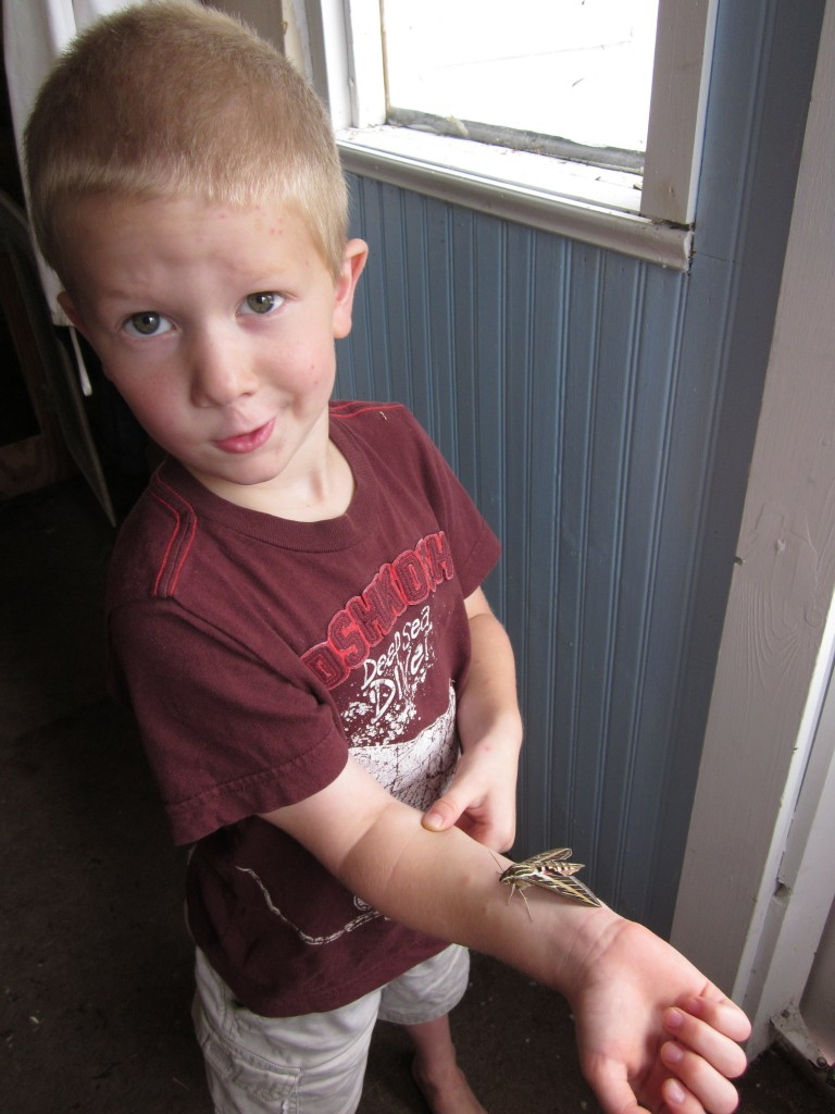 Little Mack with a beautiful moth he was studying.  He is very good at nature study (wink!).